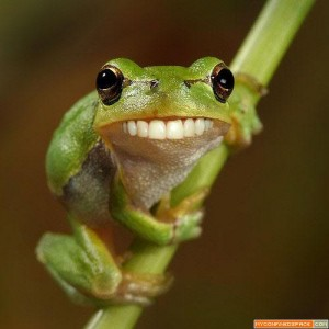 funny-frog1