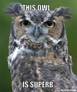 superb-owl-meme-generator-this-owl-is-superb-2b10d0
